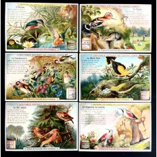 LIEBIG - 1900 - In the world of birds - 6 fig.